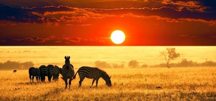 Сафари туры в Кении — адреналин и новые впечатления для активных людей